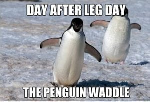 37530-The-Penguin-Waddle