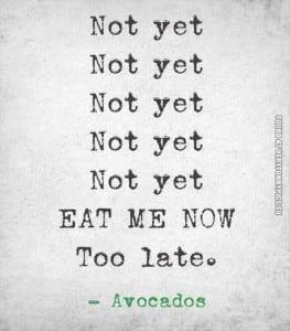 avocado quote
