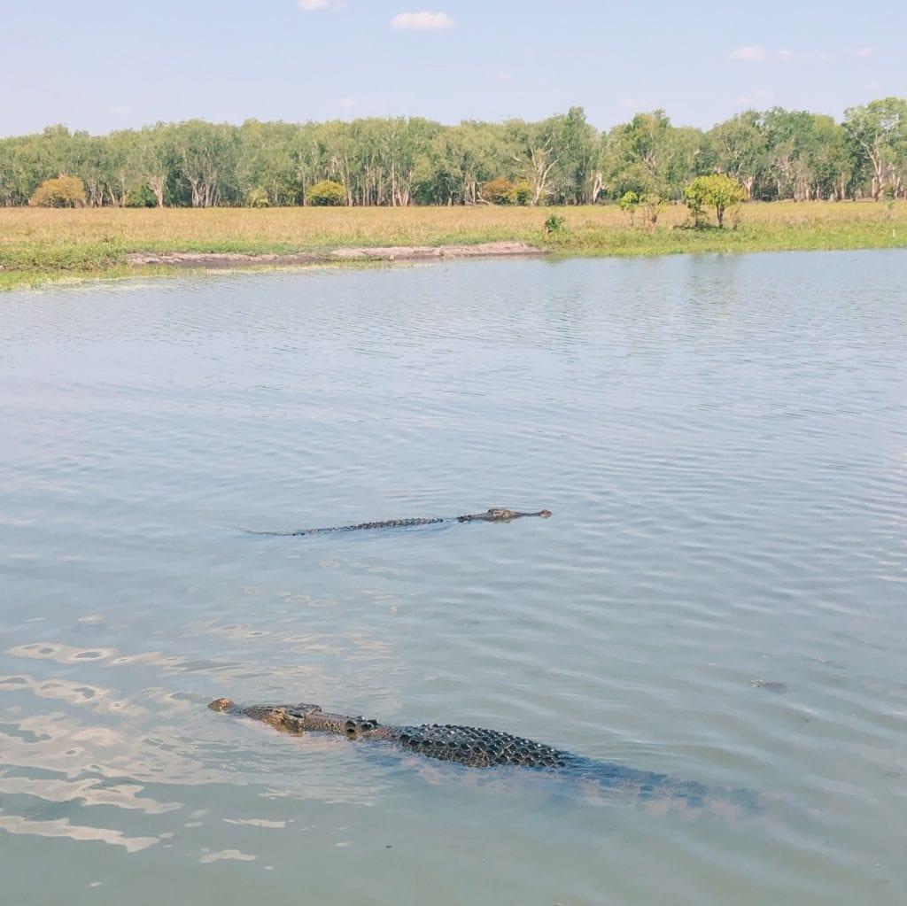 Yellow Water krokodillen