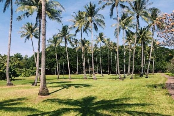 Palmbomen Darwin
