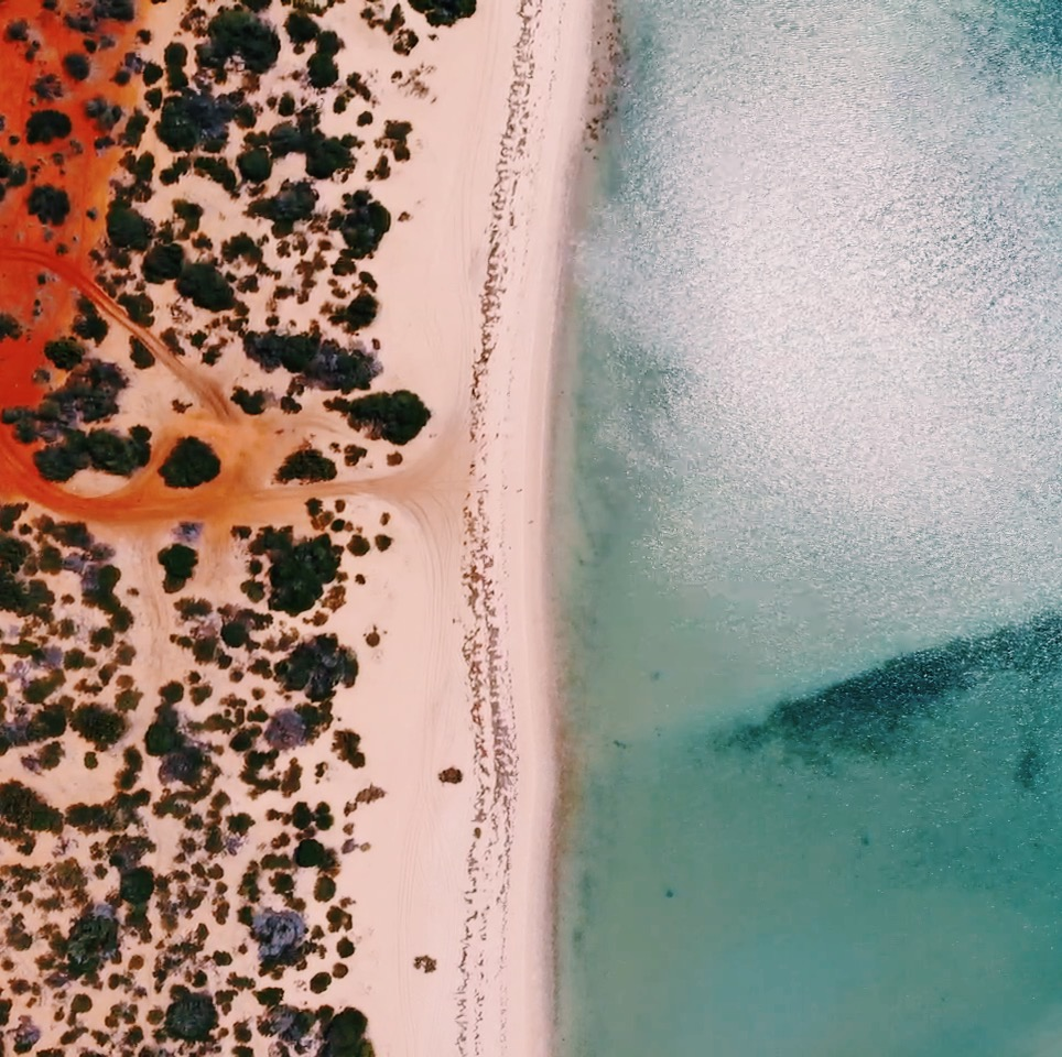 Shark Bay Drone Tom