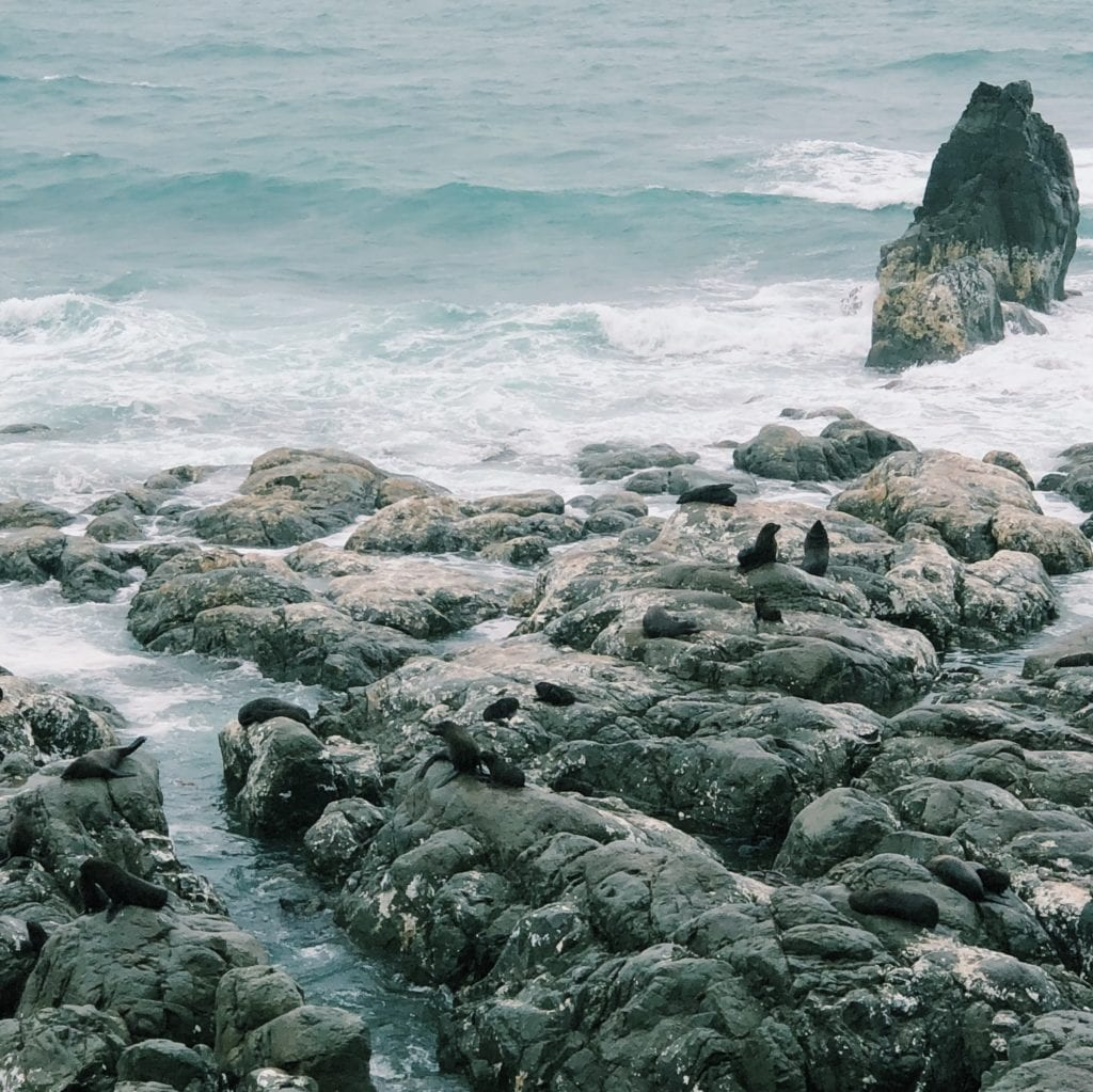 Zeehondjes bij Kaikoura